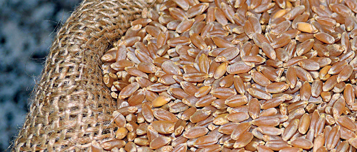 Ancient Wheat Packed With Goodness