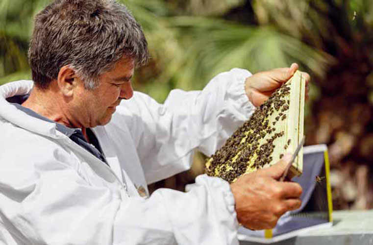 The Native Black Sicilian Bee Honey