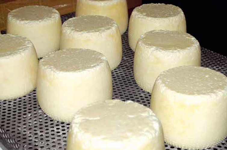 The cheese of the Happy Goats of Val di Gresta.