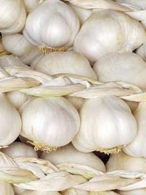 Polesine White Garlic: A Cure-All