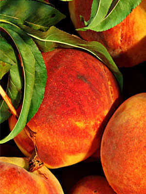 The Peaches of Emilia-Romagna