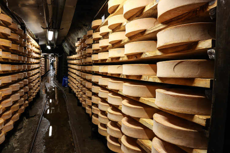 Valdigne: Wines and Fontina Cheese