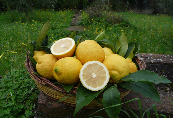 The Etna Lemon